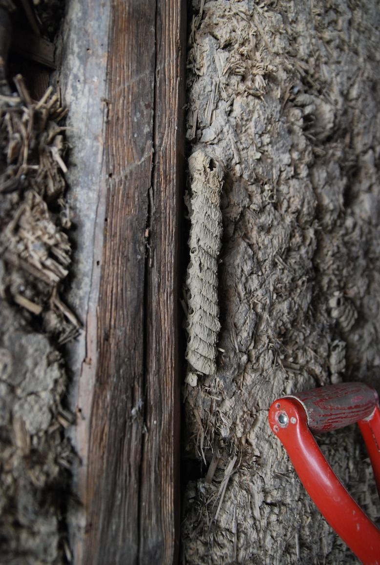 nid de guèpes