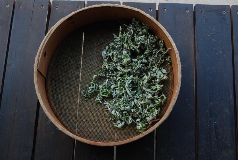 feuilles de yomogi à sécher