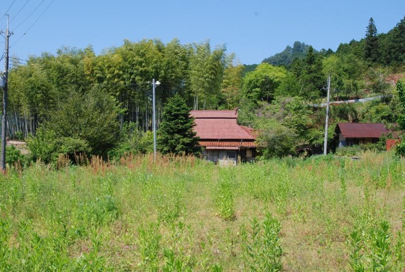 maison de totoro