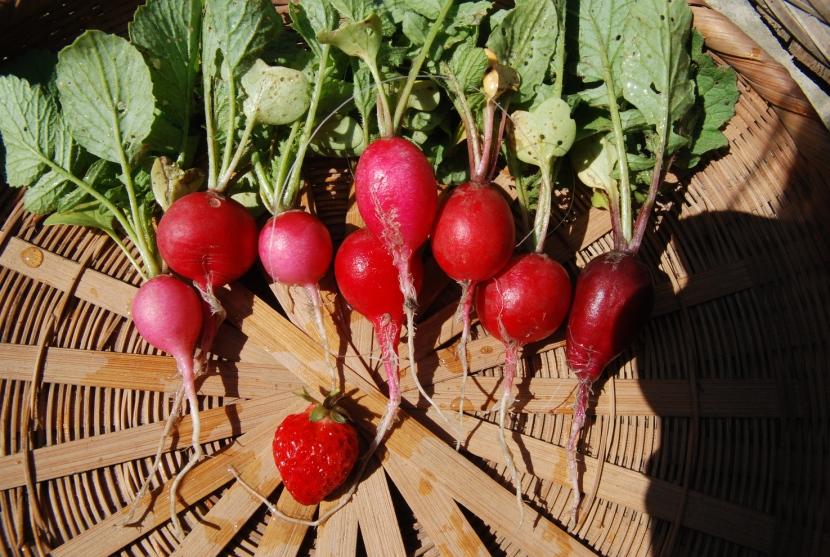 radis et fraise