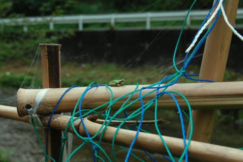 grenouille dans le jardin 2