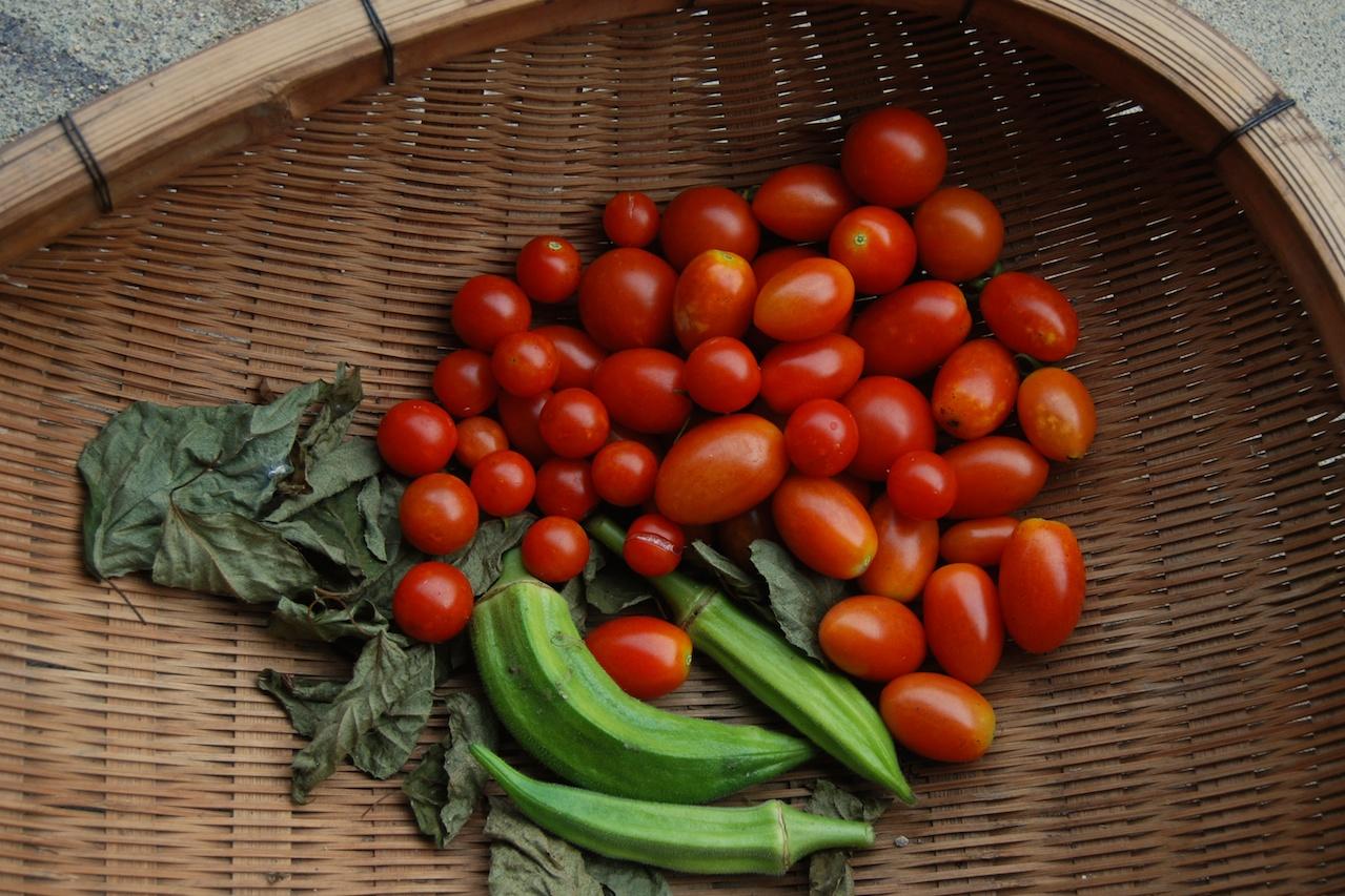 récolte du jardin tomate et ocra