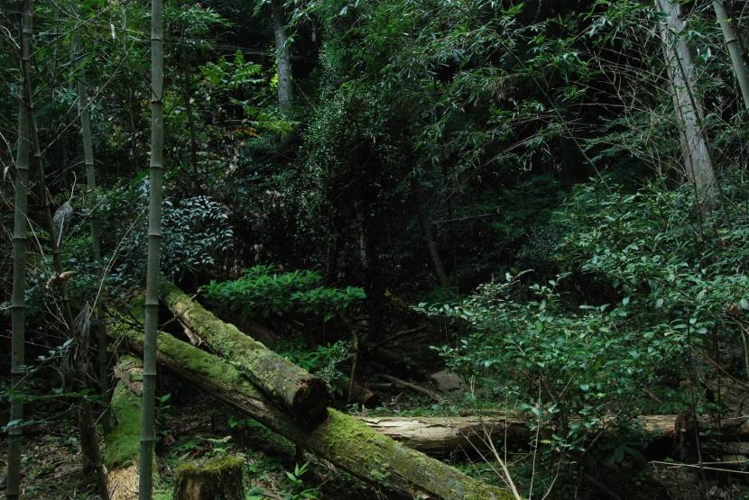 photo de la montagne