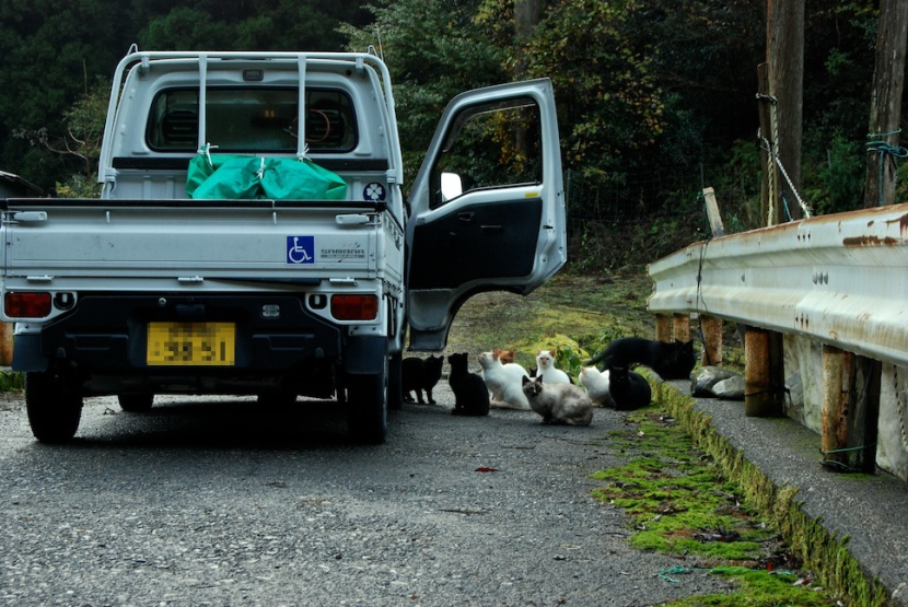 le camion et les chats