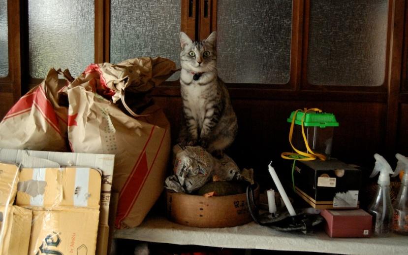 minou dans le doma