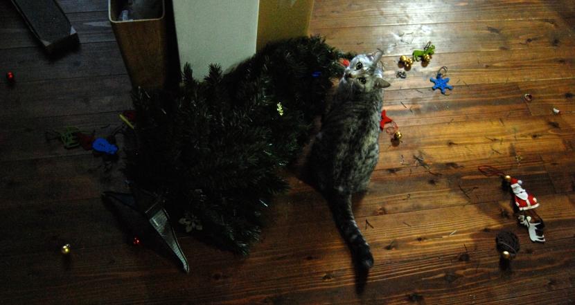 chat et sapin de noel