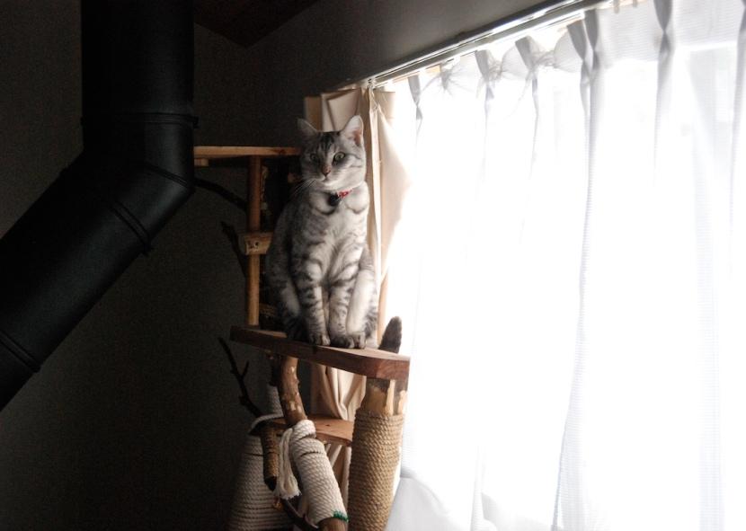 minou sur son arbre