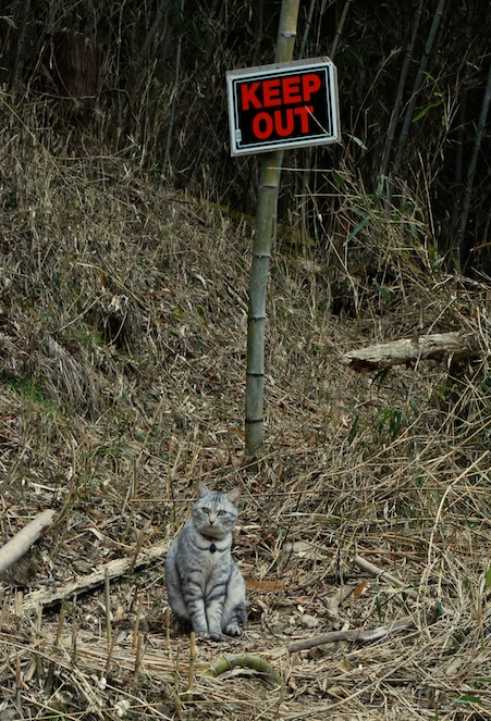 minou dans la montagne, KEEP OUT !!