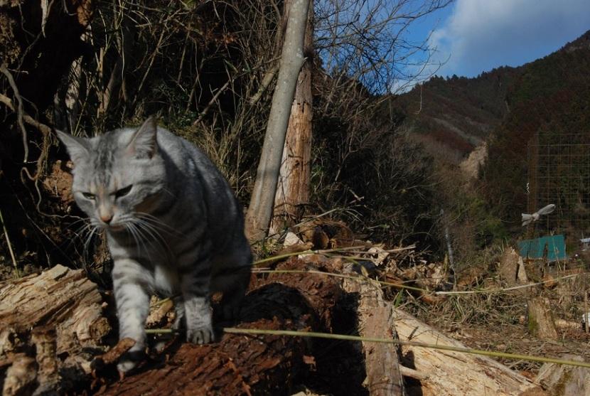 Minou dans la montagne