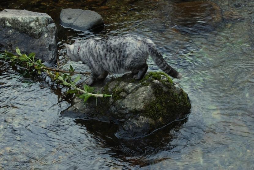 Minou traverse la rivière pour aller dans la montagne