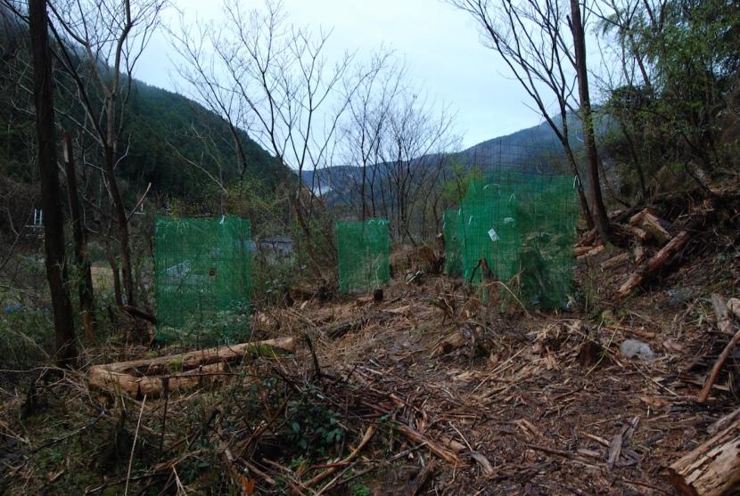 arbres plantés dans la montagne