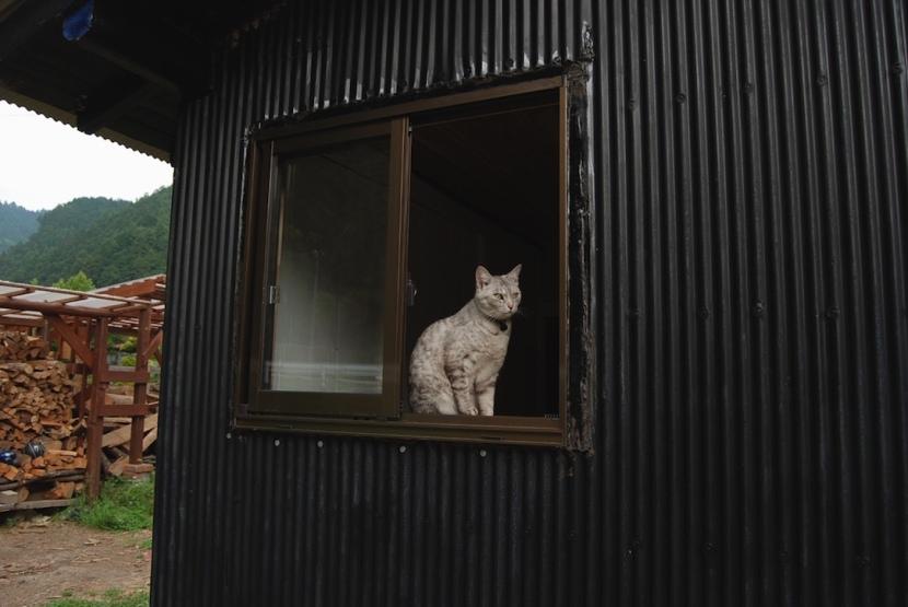 Minou dans la cabane