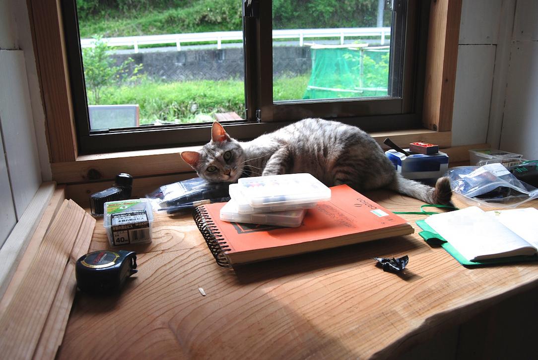 Minou sur le nouveau bureau