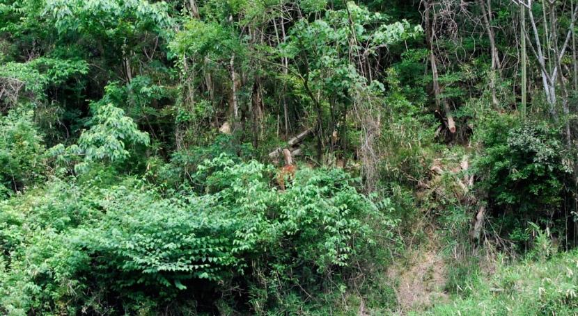 chevreuil dans la montagne
