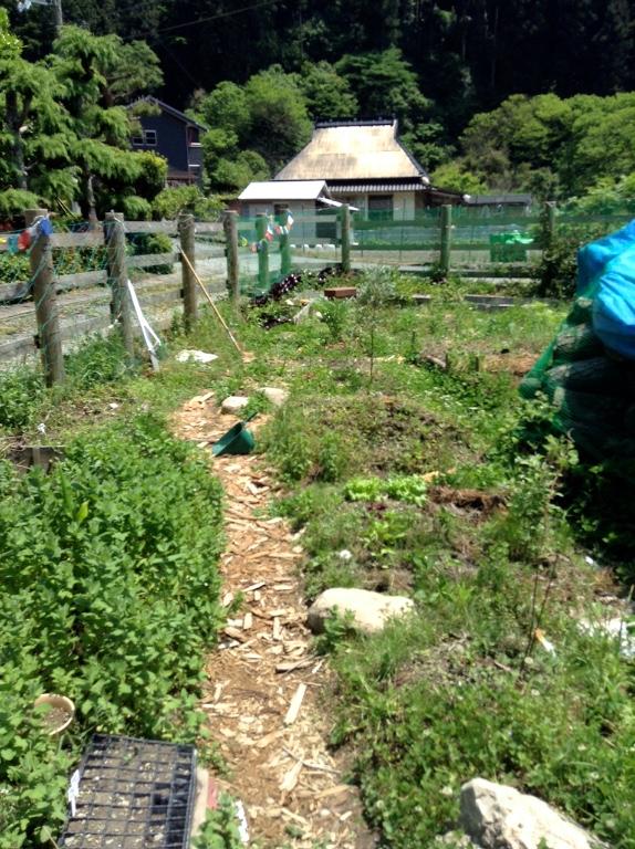 jardin IMG_1478 (1)