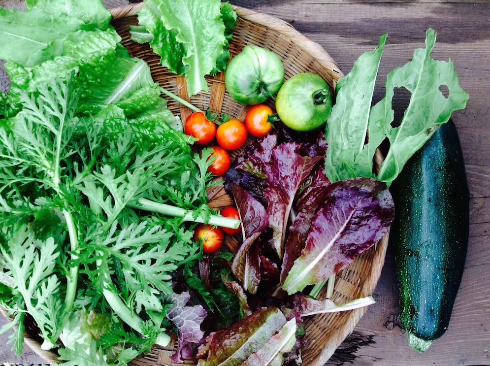 legumes juin 2015