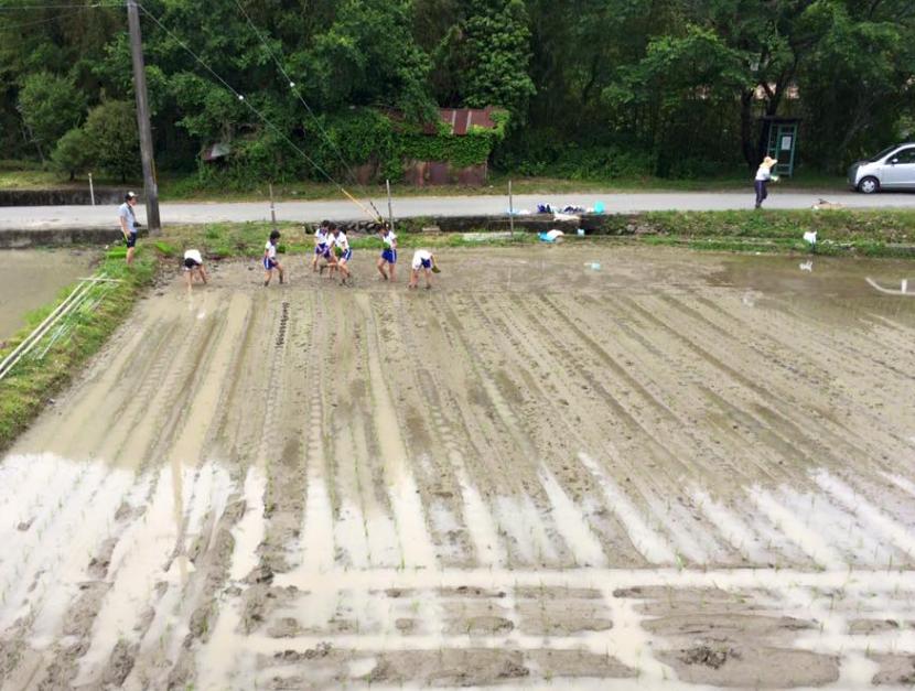 les enfants repiquent le riz