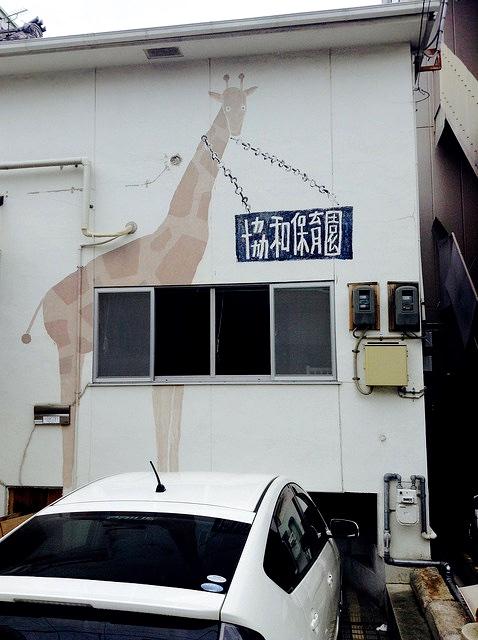 giraffe enchainee