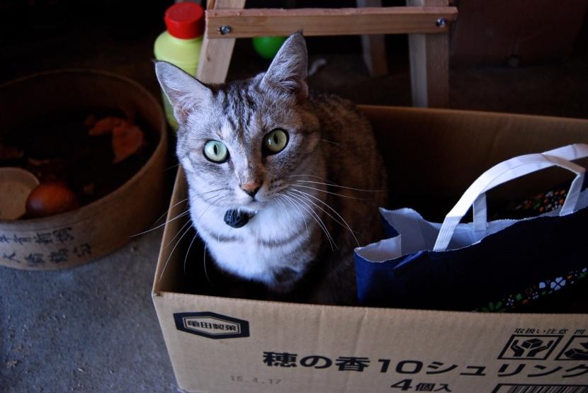 Minou in a box !