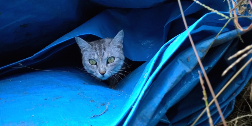 minou in the blue sheet