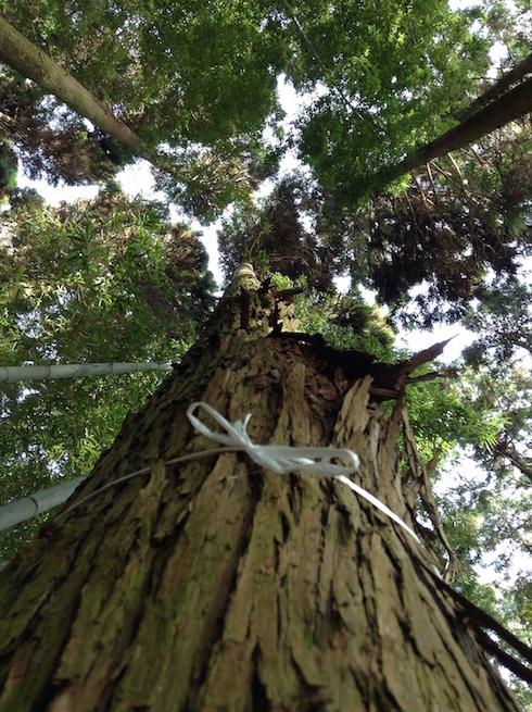 arbre a abattre 2