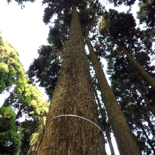 arbre a abattre 3