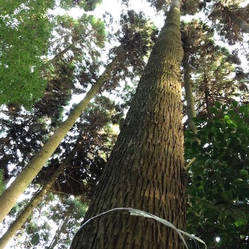 arbre a abattre 5