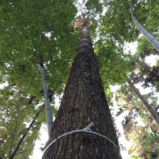 arbre a abattre 6