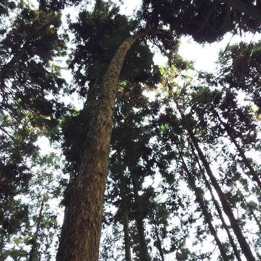arbre a abattre 7