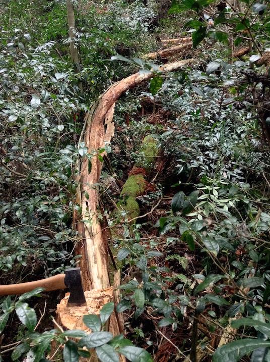 arbre courbe coupe hache