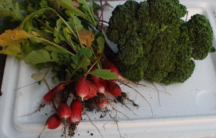 légumes 14 DEC DSC_1900