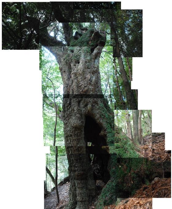 arbre géant 2041