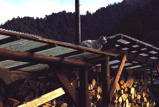 minou sur le tas de bois