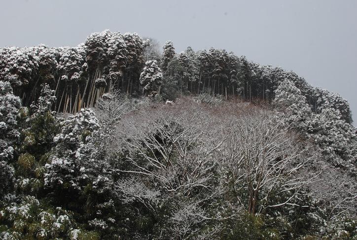 première neige DSC_2127