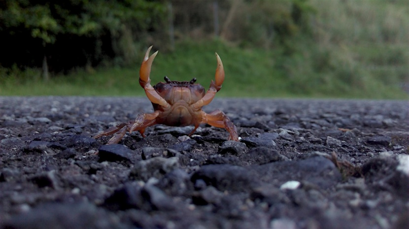 crabe IMAG0114