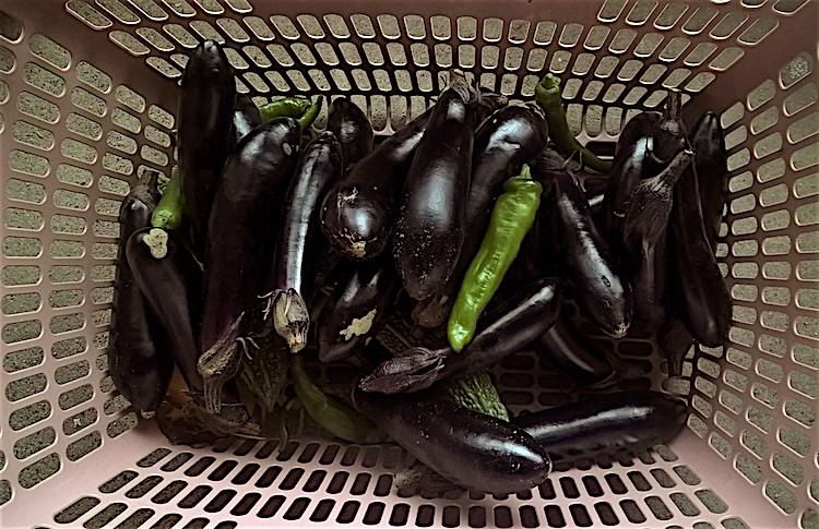 aubergine1004_15_23_40_pro