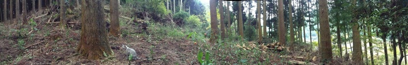 minou-montagne-panorama